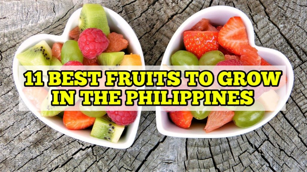 Best Fruits to Grow in the Philippines