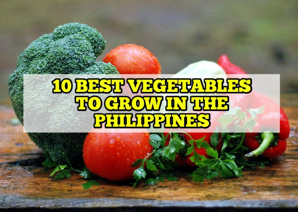 Best Vegetable to Grow in the Philippines