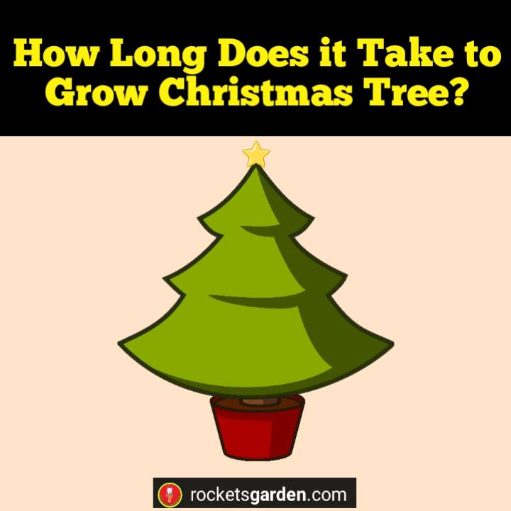 How Long Does it Take to Grow Christmas Tree