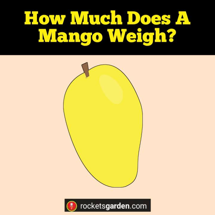how much does a mango weigh