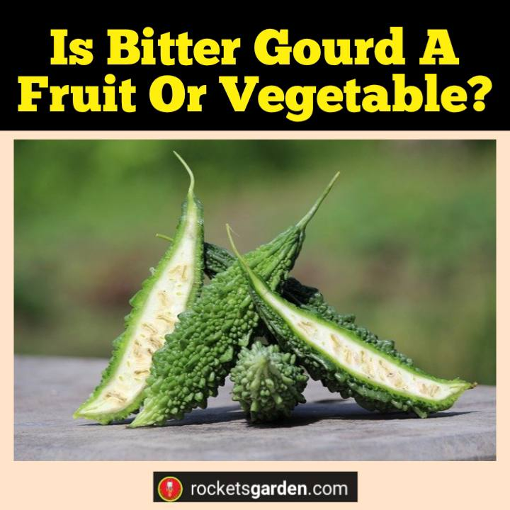 is bitter gourd a fruit or vegetable